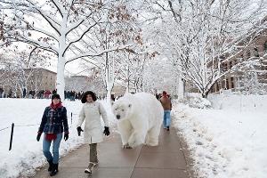 Polar bear students